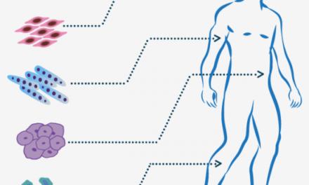 Base de datos para desarrollo embrionario, investigación con células madre y medicina regenerativa