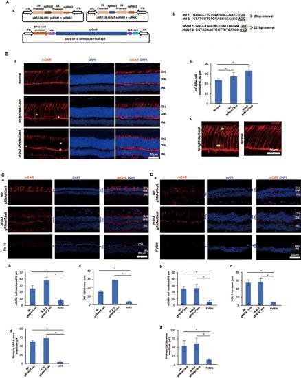 Reprogramando células para tratar la Retinosis Pigmentaria