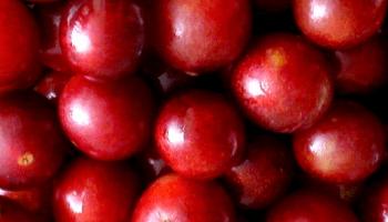 La quercetina, potente antioxidante