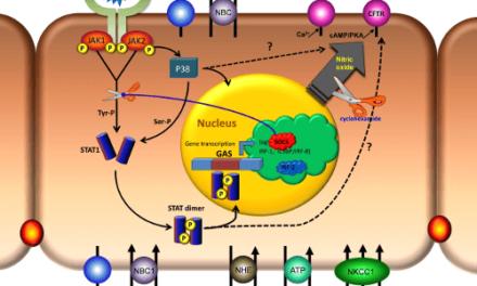 El epitelio pigmentario de la retina: Primera línea de defensa contra la DMAE