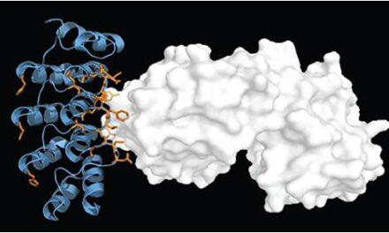 Progreso lento pero constante de las terapias celulares y génicas para la DMAE