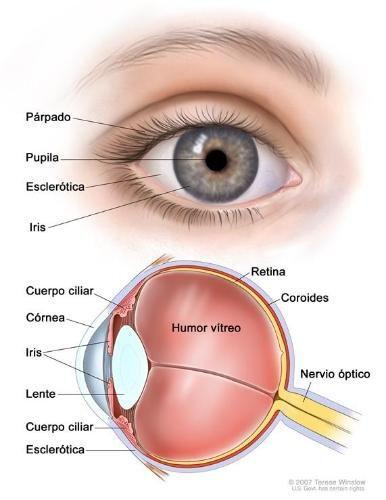 El melanoma ocular