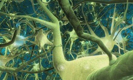 Retinas bioartificiales para trasplantes