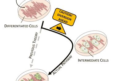 Comienza el estudio humano, el primero de este tipo, para el tratamiento de la DMAE con células madre