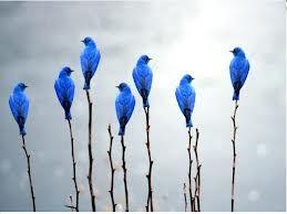 El canto de los pájaros traspasa la niebla