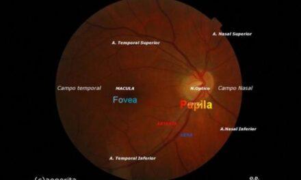 Exploración oftalmológica básica: retinografías
