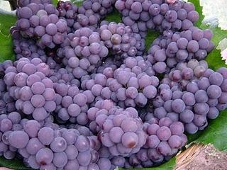 La ingesta de uvas previene o retrasa la degeneración macular