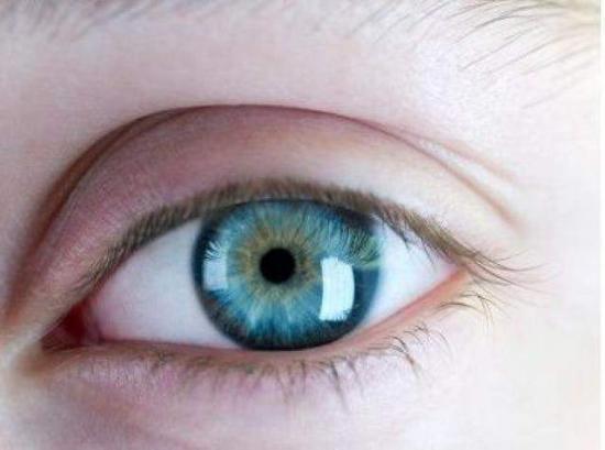 Regeneran el tejido de la córnea del ojo a partir de células madre humanas adultas