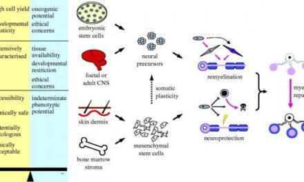 La verdad acerca de las células madre pluripotentes y la Ciencia de ACTC (I)