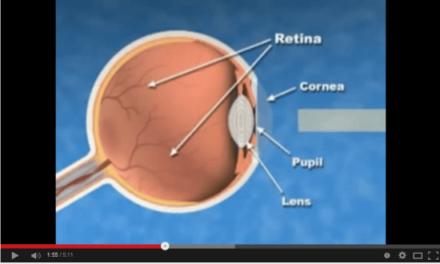 Las enfermedades oculares en los humanos