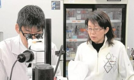 Células de la piel para frenar la degeneración macular