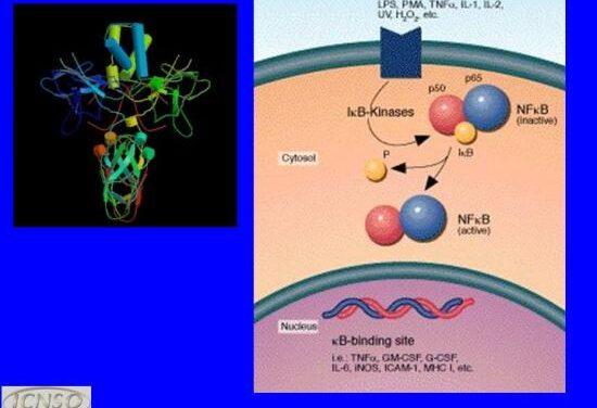 Científicos españoles identifican una molécula clave en el envejecimiento