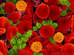 ¿Qué es la medicina regenerativa?