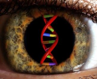 Investigación, genética y DMAE