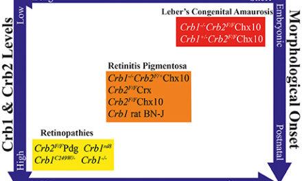 Gen CRB1
