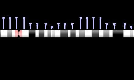 Gen PDE6β