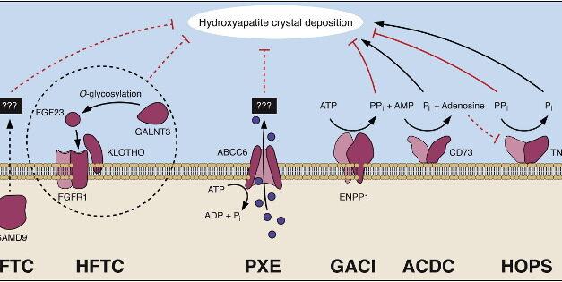 Gen ABCC6