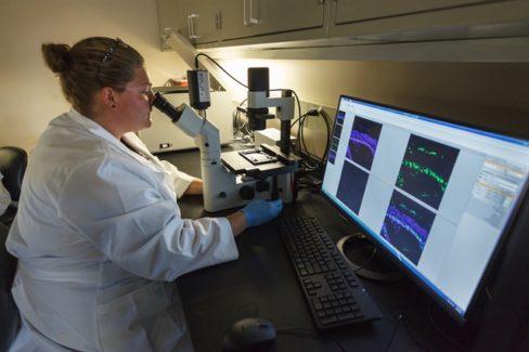 Terapia génica para preservar la visión mediante la protección de conos