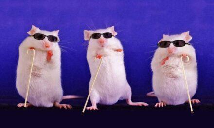 Células madre retinianas restablecen la visión en ratones