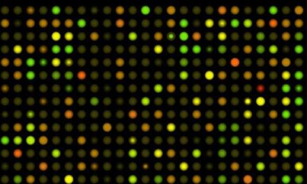 Hacia la medicina personalizada: el ambicioso proyecto del genoma finlandés