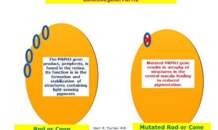 Gen PRPH2