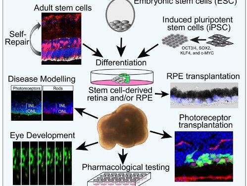 Células madre para la biología de la retina