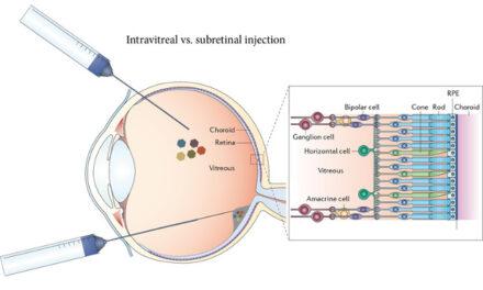 Con la inserción de un solo gen, ratones ciegos recuperan la visión