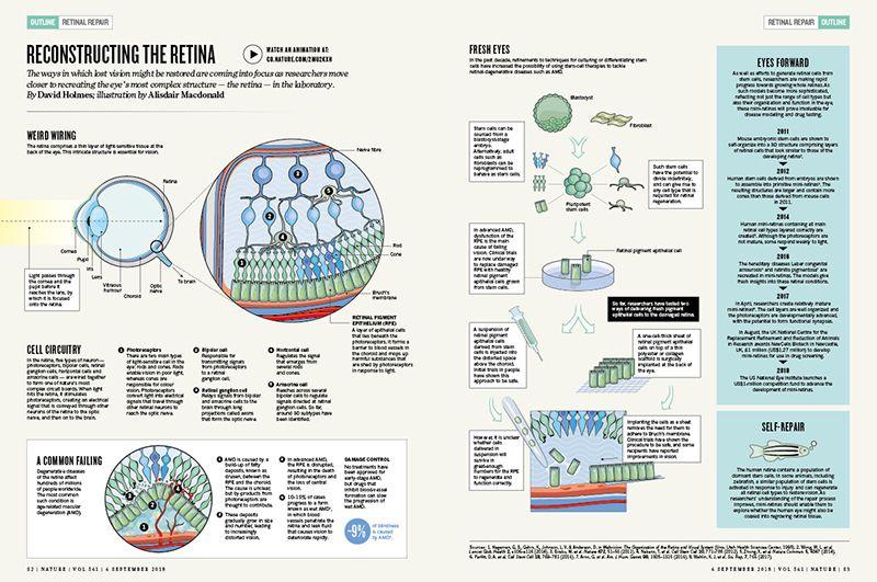 Reconstruyendo la retina
