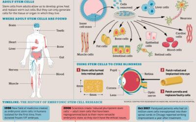 Avances en la terapia con células madre para la DMAE