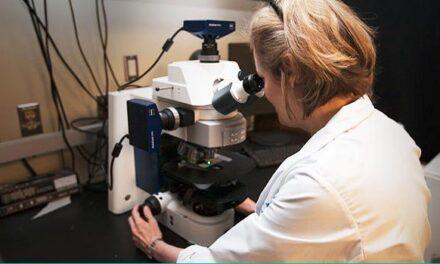 Descubriendo cómo restaurar la visión a través del trasplante celular