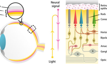 NAD+ y sirtuinas en enfermedades degenerativas de la retina