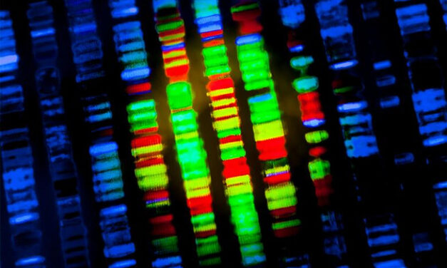 Pruebas genéticas para la degeneración macular