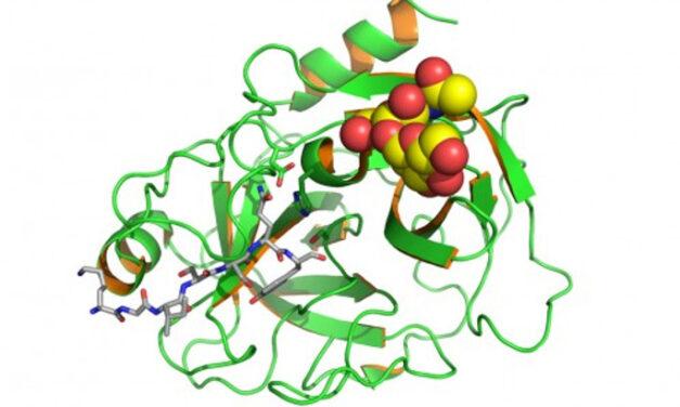 Datos preclínicos sobre el CB 2782-PEG para la DMAE seca