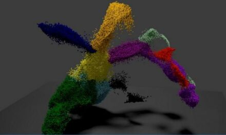 Hoja de ruta para el desarrollo de células madre