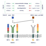 Estudio THR-317 para edema macular diabético