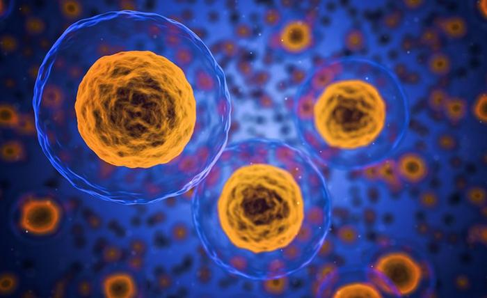 BioTime inicia fase 1/2a de OpRegen para tratamiento de la DMAE seca