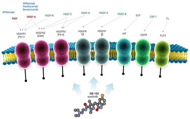 Graybug Vision inicia ensayo clínico ALTISSIMO GB-102 para DMAE húmeda