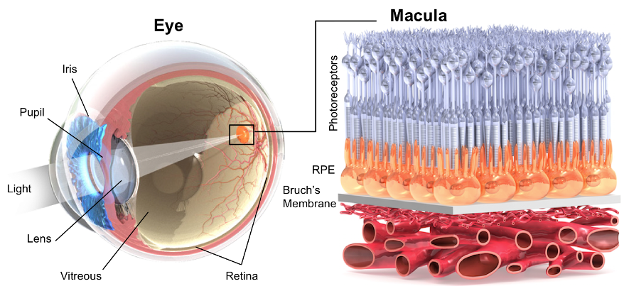 Invertir en curar la ceguera: un cuantioso beneficio para toda la sociedad