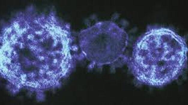 Alerta: Importantes actualizaciones sobre coronavirus