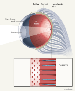 Esquema ojo biométrico artificial