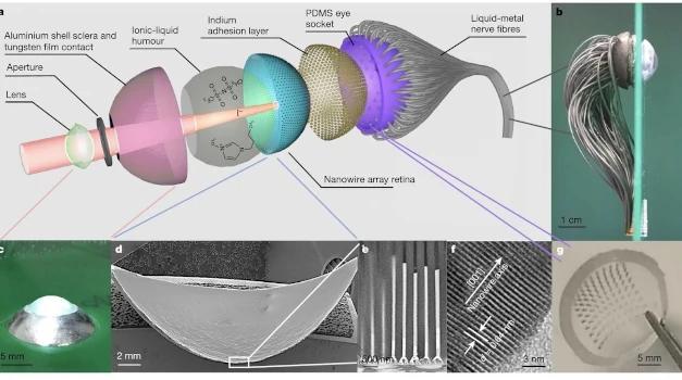 Ojo artificial mejorado por la retina hemisférica