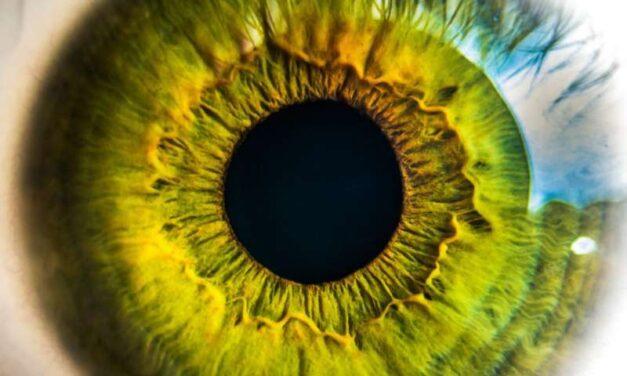 Modelado y rescate de la Retinosis Pigmentaria RP2 usando organoides de la retina derivados del iPSC