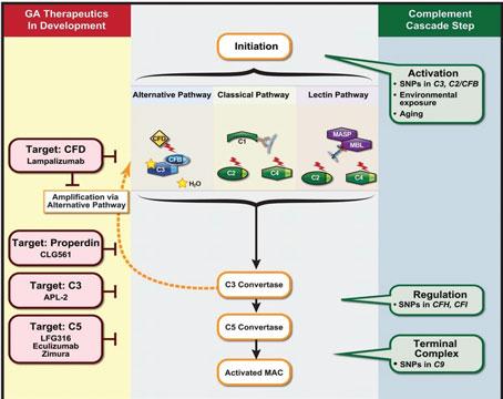 Pegcetacoplan retrasa la progresión de la atrofia geográfica (GA) en etapas tempranas (DMAE)