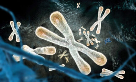 ¿Puede la investigación antienvejecimiento mantenernos sanos a largo plazo?