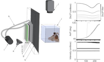 La investigación sobre la visión del pulpo hace posible una prueba rápida y sencilla para detectar la DMAE